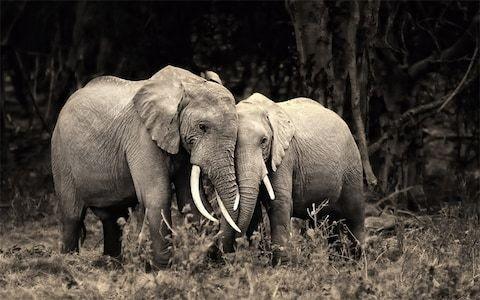 Wildlife and Nature Photography Titelbild