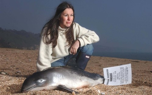 More dead dolphins washing up on Cornish beaches than ever, figures show