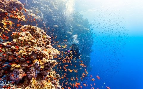 Blue Planet is back – here's how to visit the incredible locations