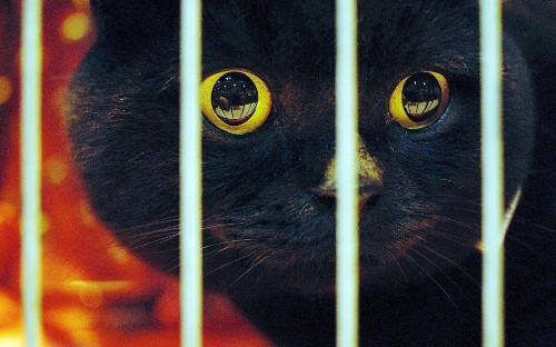 National Black Cat Day: Black cats spend more time in care than any other colour