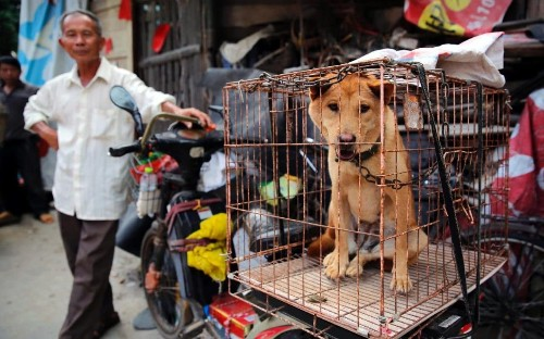 Activists rescue 1,000 dogs from controversial dog meat festival