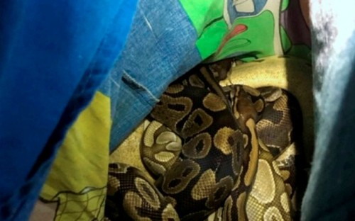 Snakes dumped by bins in Buzz Lightyear pillowcases