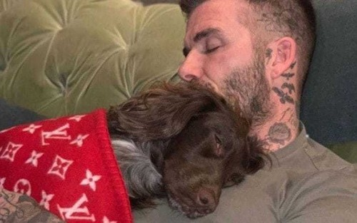 It's a dog's life - unless you happen to bethe Beckhams' dog, in which case youget a Louis Vuitton blanket