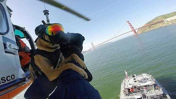 Watch coast guard dog Ricky finish helicopter training