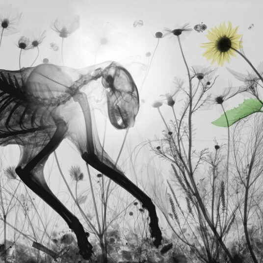 Colourised X-ray photographs of flora and fauna by Arie van't Riet: In pictures - Telegraph