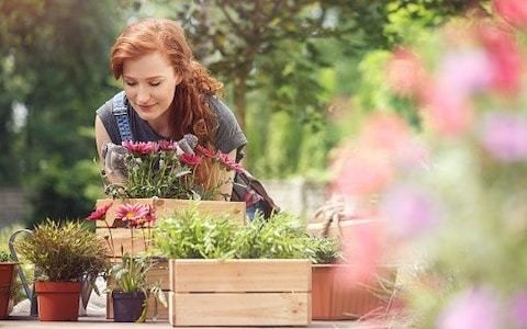 How garden therapy can help your mental health