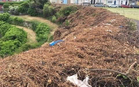 Council suspends all hedge trimming as villagers protest work has killed or disturbed hundreds of animals