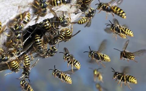 How to control wasps in your garden