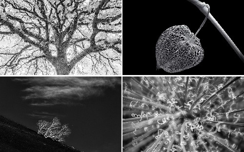 International Garden Photographer of the Year: Black & White winners