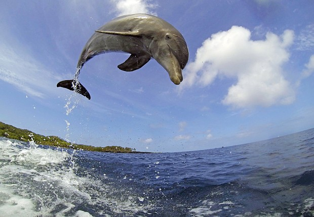 Safe havens needed for Britain's threatened dolphins and sharks