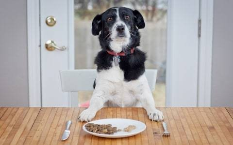 Whiskas and Pedigree maker developing meat-free pet food amid concerns over environmental impact of farming