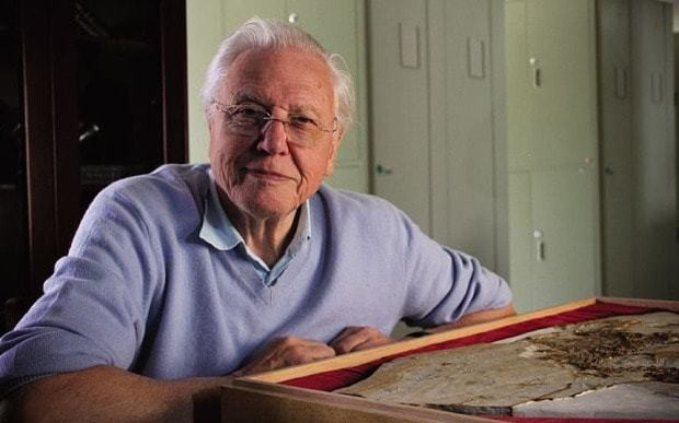 Which creature makes Sir David Attenborough's jaw drop? It's not what you'd expect