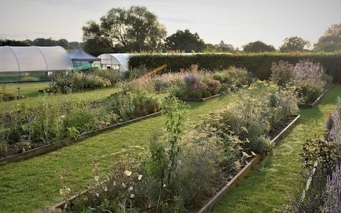 Plant Off! Top nursery puts talented garden designers on trial