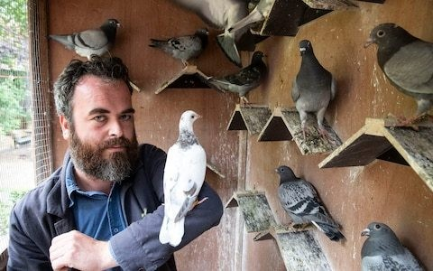 My introduction to the world of pigeon racing... and how one good bird was able to fetch £1m at auction