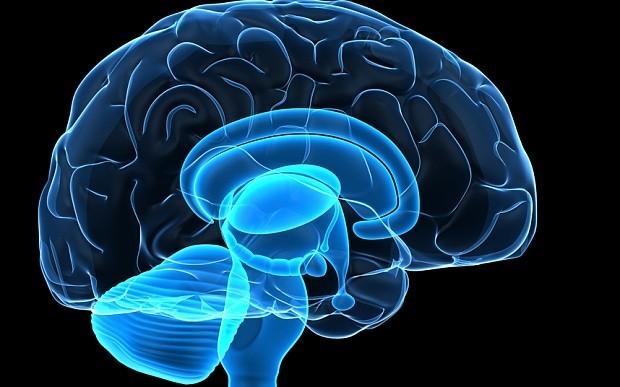 Human brain can store 4.7 billion books - ten times more than originally thought