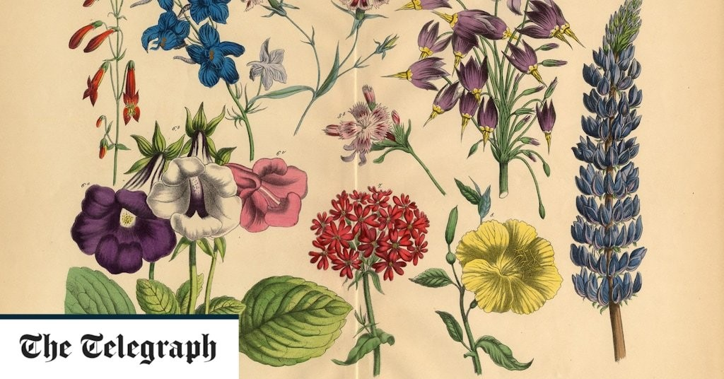 What's the point of Latin plant names? By gardening expert Helen Yemm
