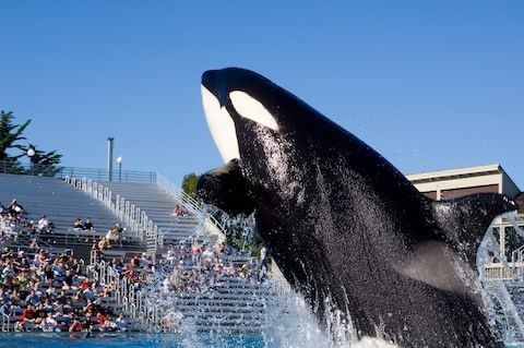 SeaWorld slams BA' Holidays decision to stop selling tickets to captive animal attractions