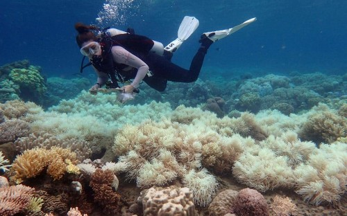 Coral reef can survive, say scientists, but fast action is needed