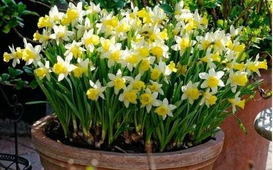 The best spring bulbs for small, shady spots and container gardens