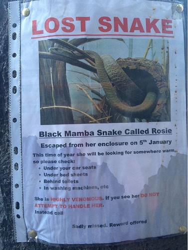 Reports of a deadly snake 'lost' around Kings Cross