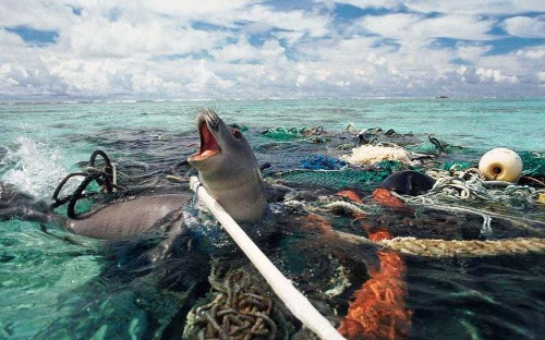Our seas have become a plastic graveyard - but can technology turn the tide?