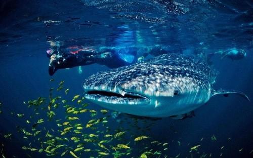 Sea of Cortez: the world's aquarium