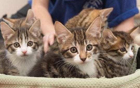 Cuddling kittens can kill you, warn scientists