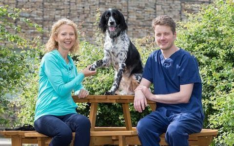 Eva the dog saved from amputation using groundbreaking bone-growing goo