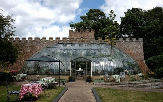 Huge American Agave plant bursts through 19th Century greenhouse roof