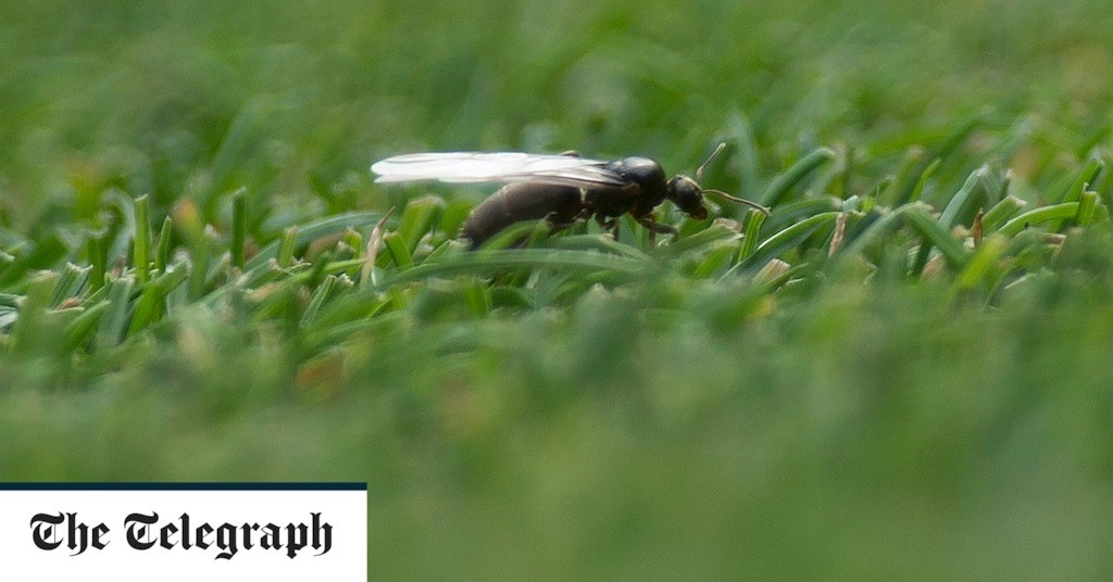 Everything you need to know about flying ants: what are they and how to get rid of them