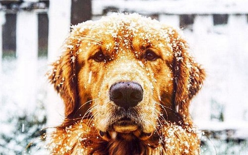 Aspen, the ski resort dog taking Instagram by storm