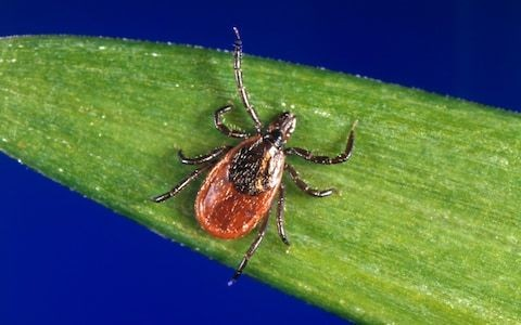 Lyme disease: why is it on the rise this summer?