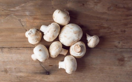 How to grow delicious fresh mushrooms on a windowsill or a log