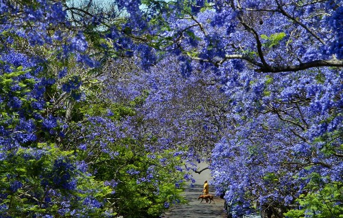 Australia in bloom: 22 photos of spring on the other side of the world