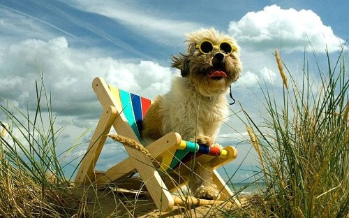 Dog-friendly hotels and accommodation in Britain