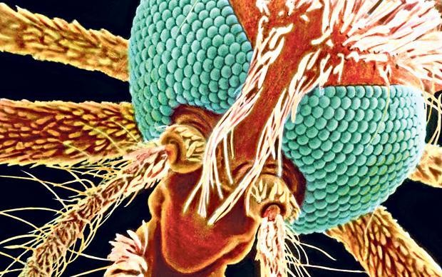What is malaria and how is it transmitted?