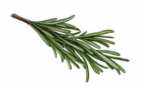 Rosemary is not a rosemary, rules RHS - it's a sage, as they tell gardeners to change plant labels