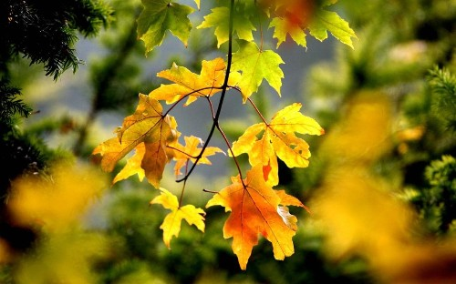 The top 7 trees for autumn leaves in your garden