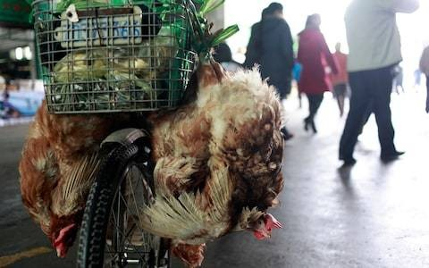 Coronavirus is a calamity for China. It cannot continue its dangerous wildlife practices any longer