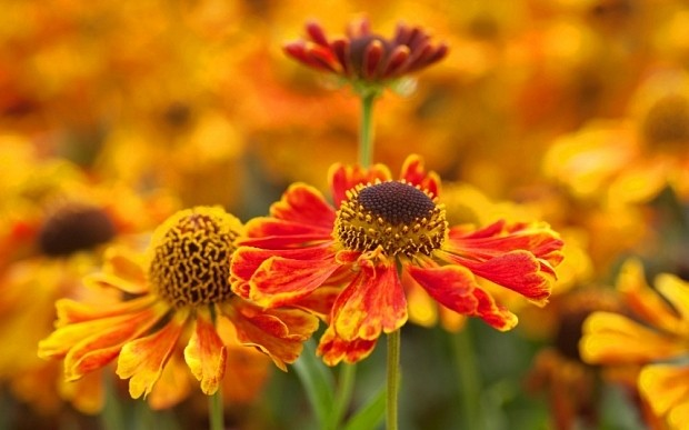 Top 100 plants every garden should have