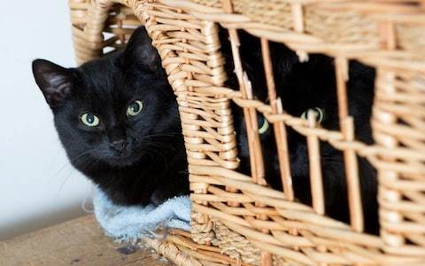 'Crazy cat lady' stereotype is nonsense, say scientists, as dog owners found to be just as neurotic