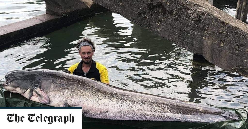 Giant catfish caught in Seine