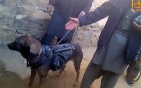 The Taliban capture a British dog of war