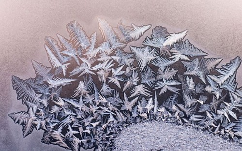 Beautiful winter frost patterns - Telegraph