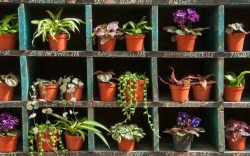 Fill your home with houseplants - they're good for your skin, says RHS