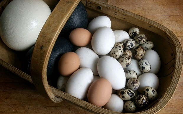 Forget boring hens' eggs: why not fry up an ostrich egg for tea?