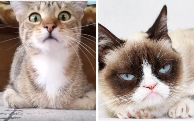 #InternationalCatDay: 12 reasons cats are superior to humans
