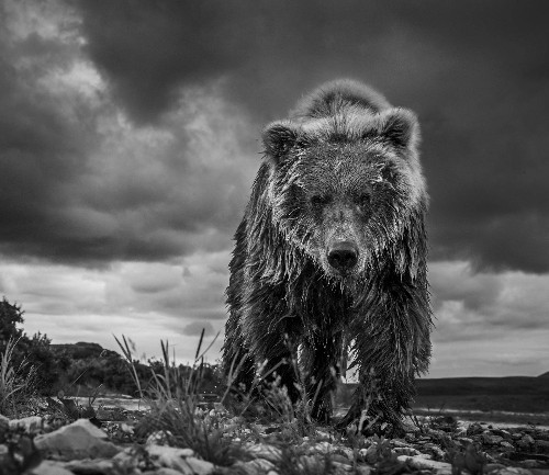 The most beautiful (and dangerous) wildlife photographs you'll probably ever see