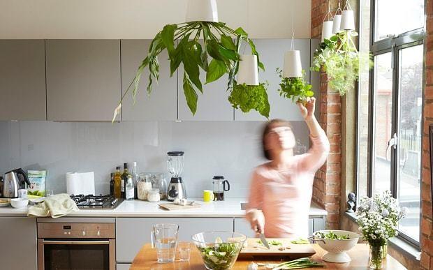 Upside down garden company blooms in European tower blocks