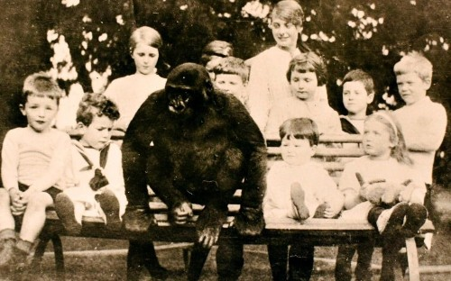 Untold story of the English village that raised a gorilla as a boy that drank tea, made its bed and washed up